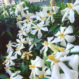 花の写真・画像素材[165972]