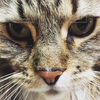 猫の写真・画像素材[166074]