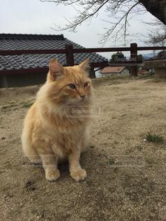 猫の写真・画像素材[166985]