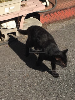猫の写真・画像素材[166991]