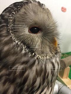 鳥の写真・画像素材[167041]