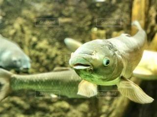 魚の写真・画像素材[3936283]
