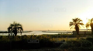 葛西臨海水族園からの夕暮れの写真・画像素材[3938889]