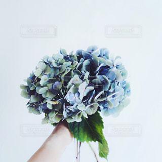 花の写真・画像素材[546763]