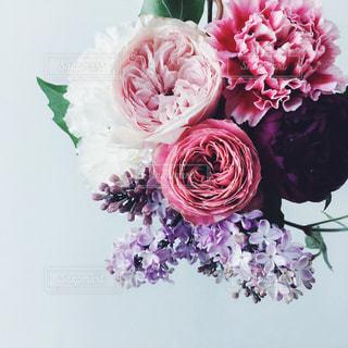 花の写真・画像素材[546842]