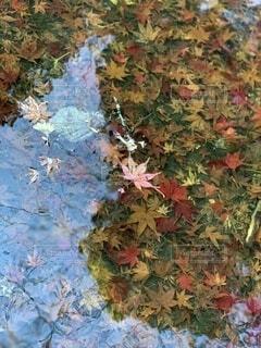 水の中の秋の写真・画像素材[3938472]