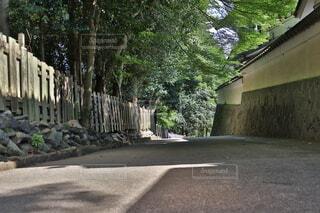 道路の真ん中にある木の写真・画像素材[4878974]