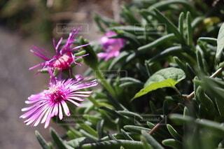 植物の上の紫色の花の写真・画像素材[4886277]
