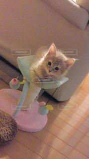 猫の写真・画像素材[165730]