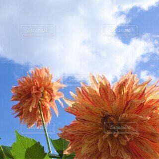 空に咲く花の写真・画像素材[3941822]