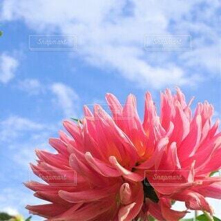 花のクローズアップの写真・画像素材[3941824]