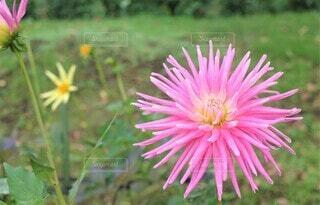 花のクローズアップの写真・画像素材[3941864]