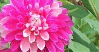 花のクローズアップの写真・画像素材[3941865]