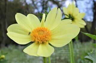 花のクローズアップの写真・画像素材[3941873]