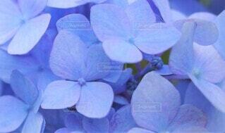 花のクローズアップの写真・画像素材[3942795]