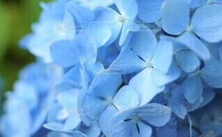 花のクローズアップの写真・画像素材[3942810]