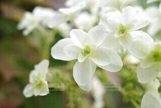 花のクローズアップの写真・画像素材[3942867]
