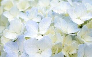 花のクローズアップの写真・画像素材[3942873]