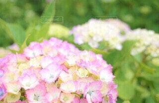 花のクローズアップの写真・画像素材[3942925]