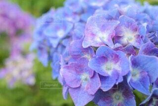 花のクローズアップの写真・画像素材[3942929]