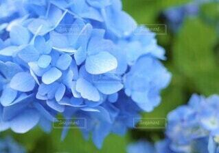 花のクローズアップの写真・画像素材[3942936]