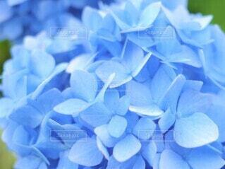 花のクローズアップの写真・画像素材[3942935]