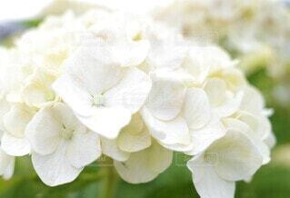 花のクローズアップの写真・画像素材[3943309]