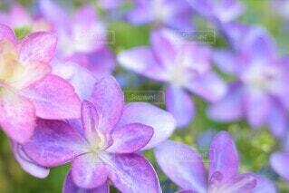花のクローズアップの写真・画像素材[3943354]