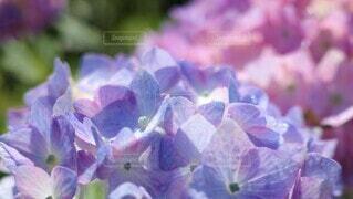 花のクローズアップの写真・画像素材[3943410]