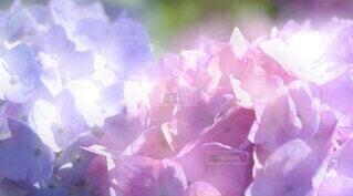 花のクローズアップの写真・画像素材[3943416]