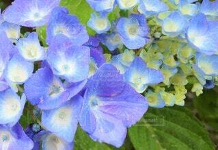花のクローズアップの写真・画像素材[3943497]