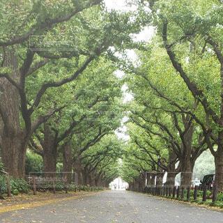 緑豊かに生い茂った道の写真・画像素材[3942255]