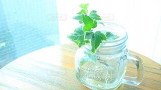 朝の陽の光を浴びた植物の写真・画像素材[3942304]