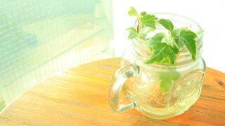 夕暮れ時の植物の写真・画像素材[3942306]