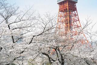 東京タワーの麓の写真・画像素材[4296574]