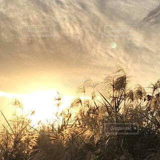 神秘的な眩い夕陽に癒されるの写真・画像素材[3944966]
