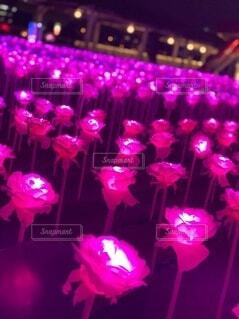 バラのイルミネーションの写真・画像素材[3949702]