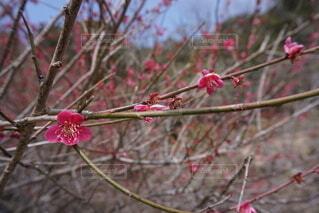 花の写真・画像素材[3950749]