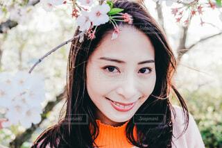 桜のなかでの写真・画像素材[4023241]