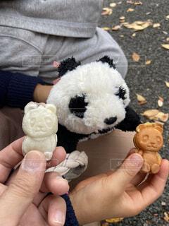 パンダのぬいぐるみとパンダ焼きの写真・画像素材[3952319]
