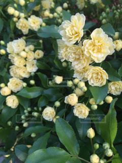 花の写真・画像素材[166311]