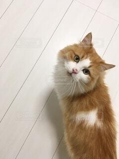 ふわふわの猫の写真・画像素材[3967706]