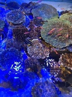 魚の写真・画像素材[3967709]