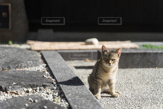 近所の猫の写真・画像素材[3961986]