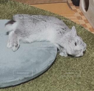 くつろぎすぎて頭がクッションからはみ出したまま寝るウサギの写真・画像素材[4042411]