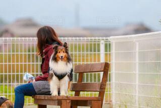 ベンチに座っている犬の写真・画像素材[3970696]