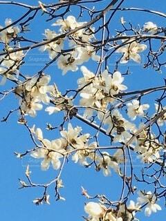 青空と花の写真・画像素材[3963006]