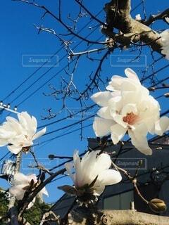 咲き誇るの写真・画像素材[3963005]