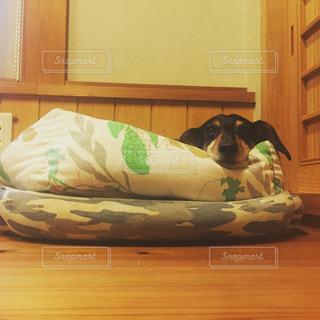 犬の写真・画像素材[166939]