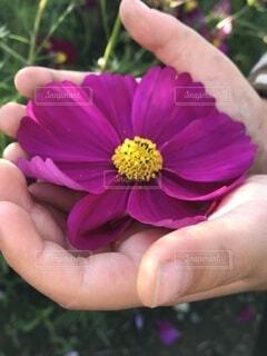 花を持つ手の写真・画像素材[3975930]